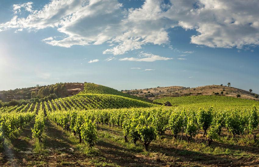 Italienische Weine
