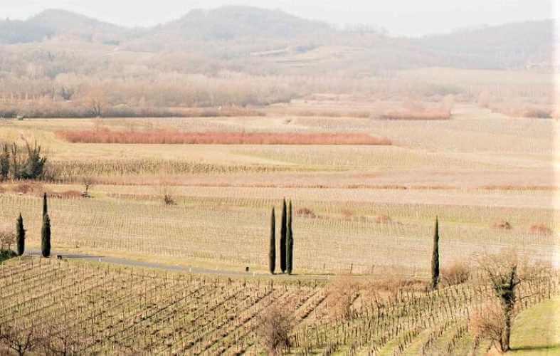 Spanische Rotwein-Aktionspreise